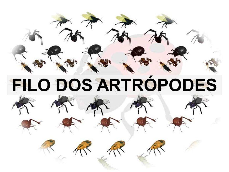 FILO DOS ARTRÓPODES
