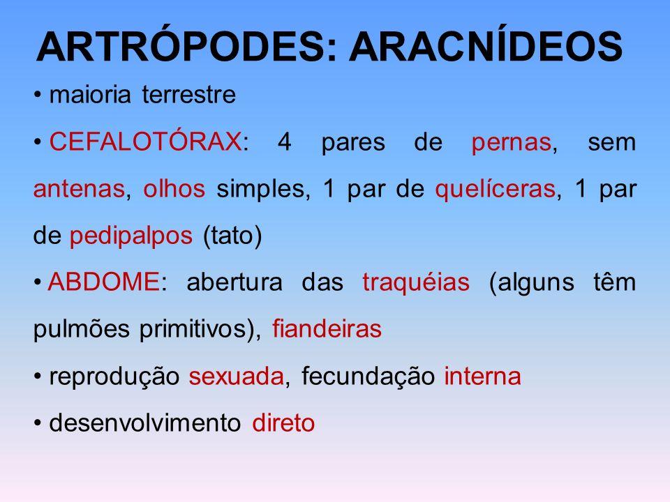 ARTRÓPODES: ARACNÍDEOS maioria terrestre CEFALOTÓRAX: 4 pares de pernas, sem antenas, olhos simples, 1 par de quelíceras, 1 par de pedipalpos (tato) A