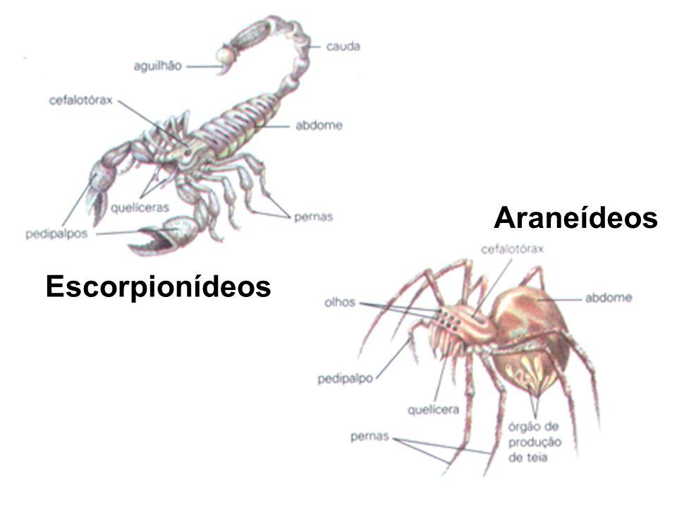 Escorpionídeos Araneídeos