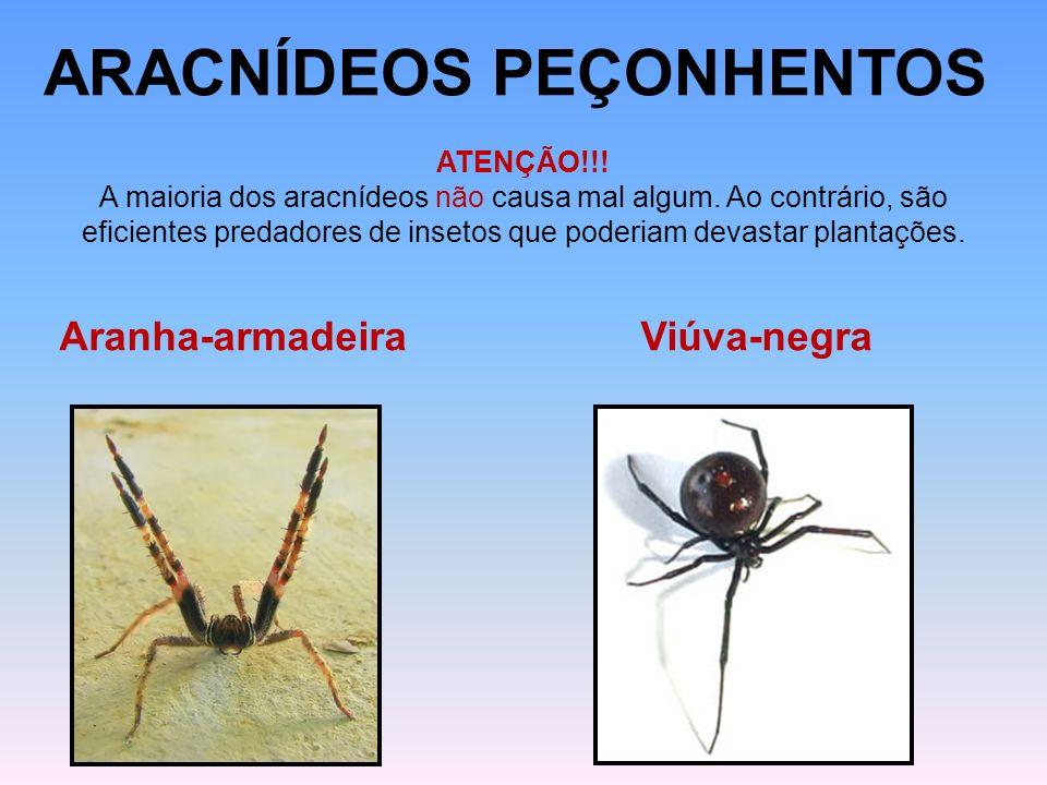 ARACNÍDEOS PEÇONHENTOS ATENÇÃO!!! A maioria dos aracnídeos não causa mal algum. Ao contrário, são eficientes predadores de insetos que poderiam devast
