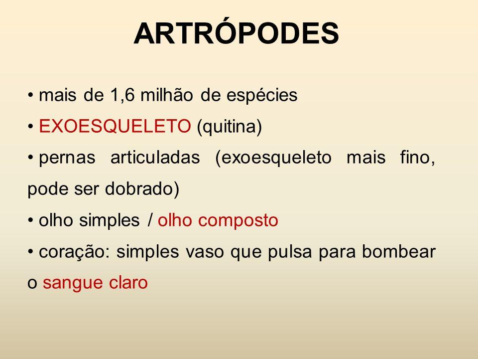 ARTRÓPODES corpo dividido em segmentos apêndices do corpo: pernas, antenas, peças bucais MUDA: abandonam o exoesqueleto, crescem e fabricam outro maior