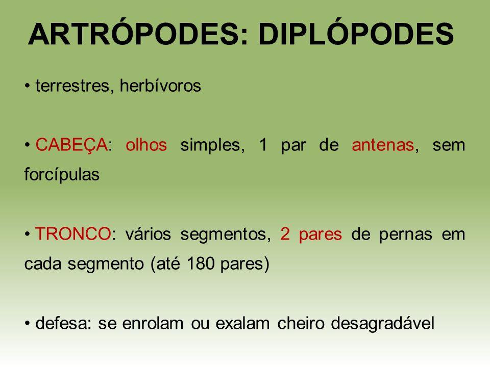 ARTRÓPODES: DIPLÓPODES terrestres, herbívoros CABEÇA: olhos simples, 1 par de antenas, sem forcípulas TRONCO: vários segmentos, 2 pares de pernas em c
