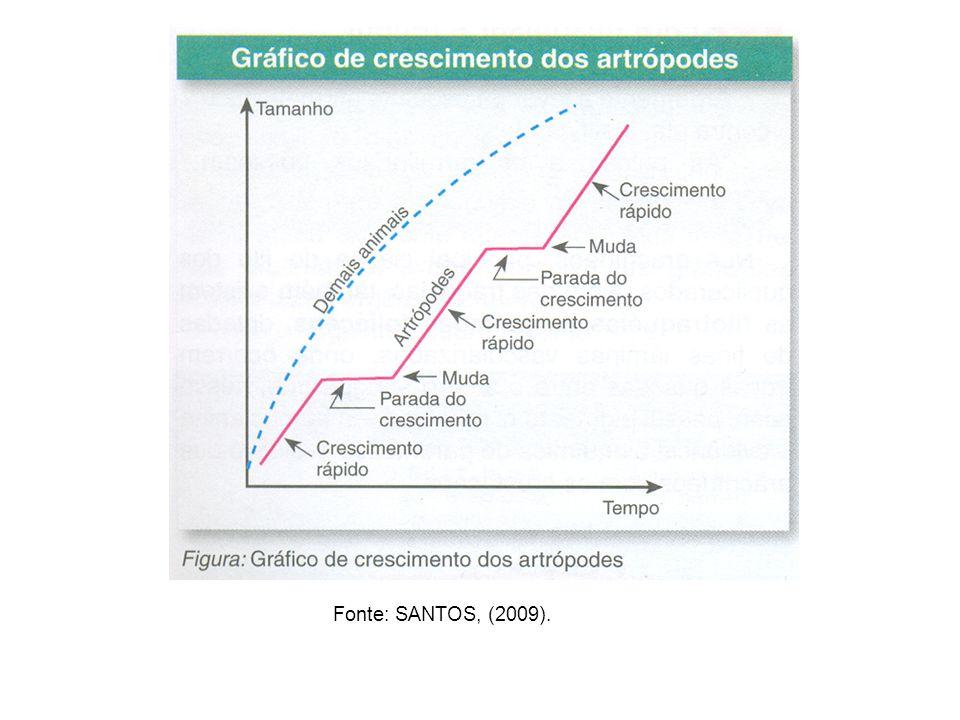 CLASSES DE ARTRÓPODES Insetos (pulga, mosca, gafanhoto...) Crustáceos (caranguejo, camarão...) Aracnídeos (escorpião, aranha, carrapato...) Diplópodes (piolho-de-cobra) Quilópodes (centopéia)