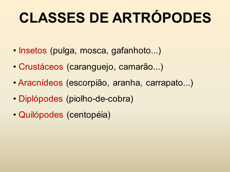 CLASSES DE ARTRÓPODES Insetos (pulga, mosca, gafanhoto...) Crustáceos (caranguejo, camarão...) Aracnídeos (escorpião, aranha, carrapato...) Diplópodes