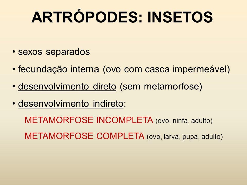 ARTRÓPODES: INSETOS sexos separados fecundação interna (ovo com casca impermeável) desenvolvimento direto (sem metamorfose) desenvolvimento indireto:
