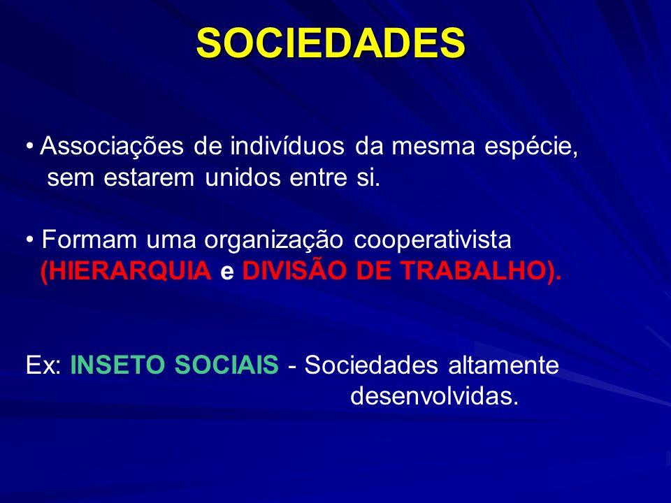 SOCIEDADES Associações de indivíduos da mesma espécie, sem estarem unidos entre si. Formam uma organização cooperativista (HIERARQUIA e DIVISÃO DE TRA