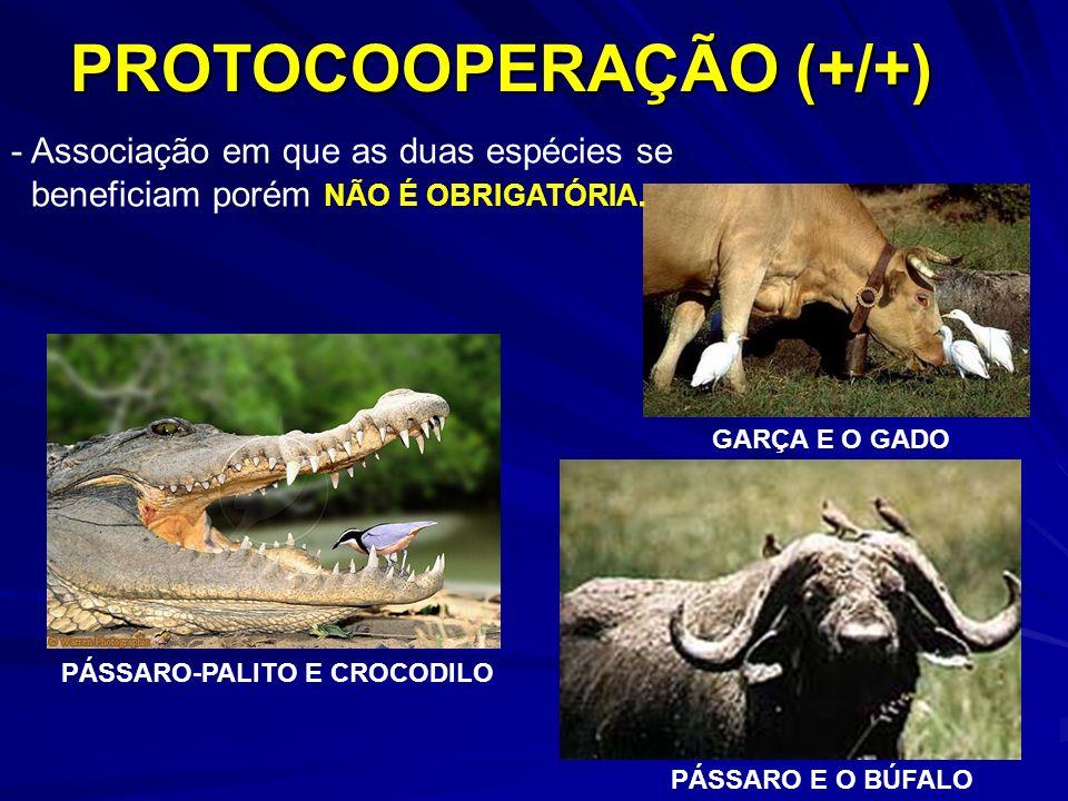 PROTOCOOPERAÇÃO (+/+) - Associação em que as duas espécies se beneficiam porém NÃO É OBRIGATÓRIA. PÁSSARO-PALITO E CROCODILO GARÇA E O GADO PÁSSARO E