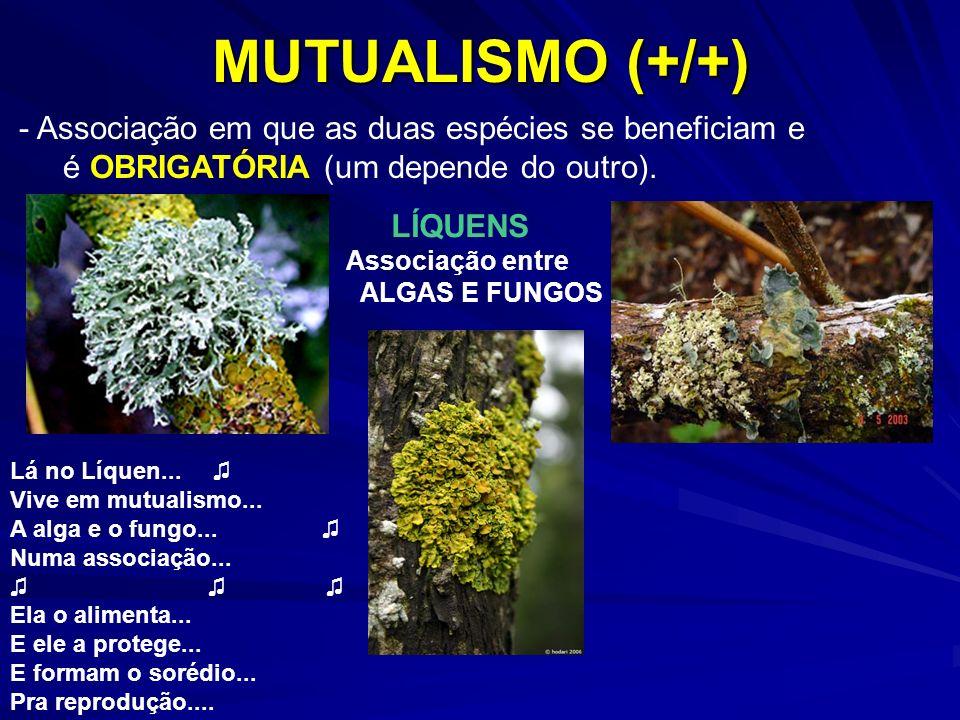 MUTUALISMO (+/+) LÍQUENS Associação entre ALGAS E FUNGOS - Associação em que as duas espécies se beneficiam e é OBRIGATÓRIA (um depende do outro). Lá