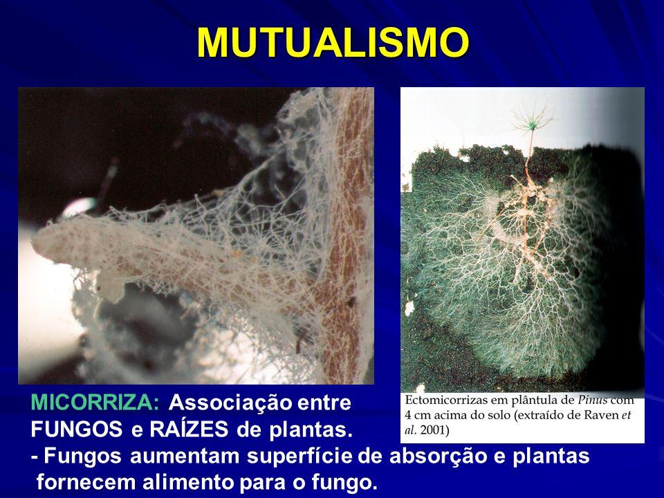 MICORRIZA: Associação entre FUNGOS e RAÍZES de plantas. - Fungos aumentam superfície de absorção e plantas fornecem alimento para o fungo.MUTUALISMO