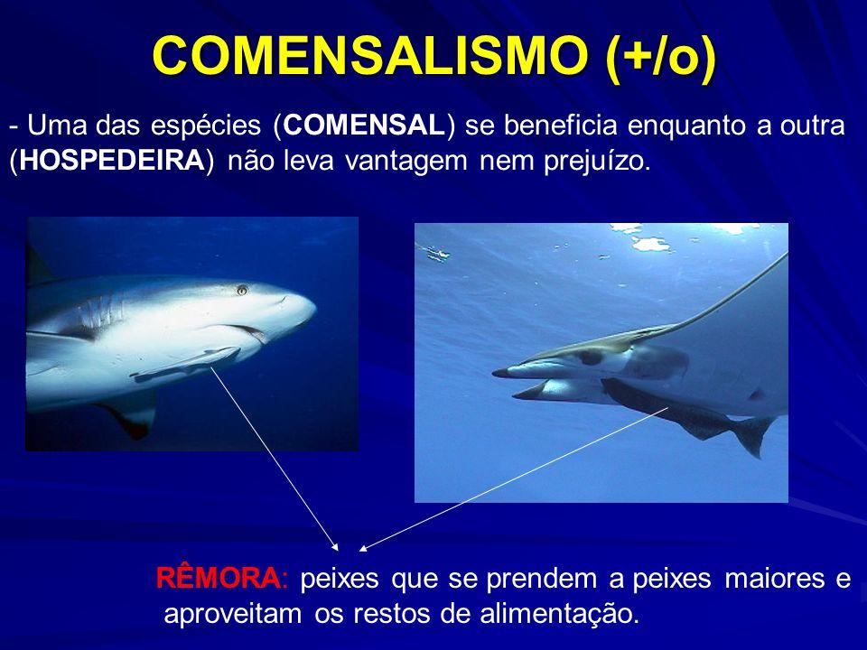 COMENSALISMO (+/o) - Uma das espécies (COMENSAL) se beneficia enquanto a outra (HOSPEDEIRA) não leva vantagem nem prejuízo. RÊMORA: peixes que se pren