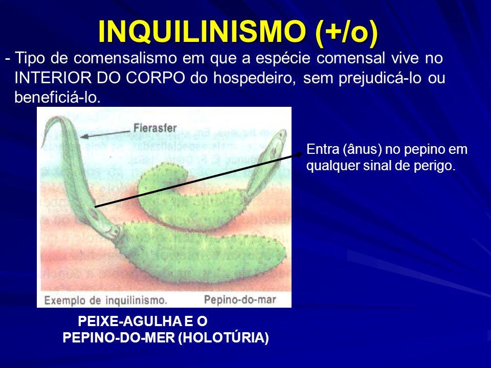 INQUILINISMO (+/o) - Tipo de comensalismo em que a espécie comensal vive no INTERIOR DO CORPO do hospedeiro, sem prejudicá-lo ou beneficiá-lo. PEIXE-A