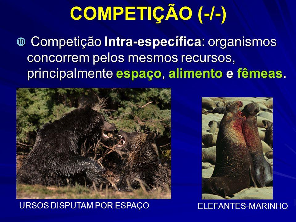 COMPETIÇÃO (-/-) Competição Intra-específica: organismos concorrem pelos mesmos recursos, principalmente espaço, alimento e fêmeas. Competição Intra-e