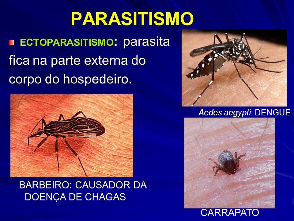 ECTOPARASITISMO : parasita fica na parte externa do corpo do hospedeiro. PARASITISMO BARBEIRO: CAUSADOR DA DOENÇA DE CHAGAS Aedes aegypti: DENGUE CARR