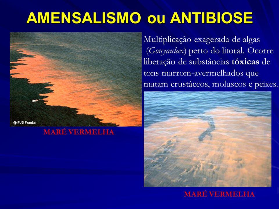 AMENSALISMO ou ANTIBIOSE Multiplicação exagerada de algas (Gonyaulax) perto do litoral. Ocorre liberação de substâncias tóxicas de tons marrom-avermel