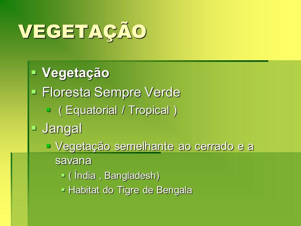 VEGETAÇÃO Vegetação Vegetação Floresta Sempre Verde Floresta Sempre Verde ( Equatorial / Tropical ) ( Equatorial / Tropical ) Jangal Jangal Vegetação