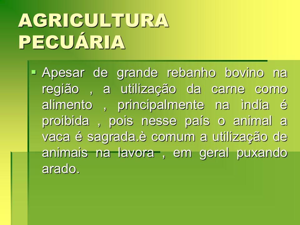 AGRICULTURA PECUÁRIA Apesar de grande rebanho bovino na região, a utilização da carne como alimento, principalmente na ìndia é proibida, pois nesse pa