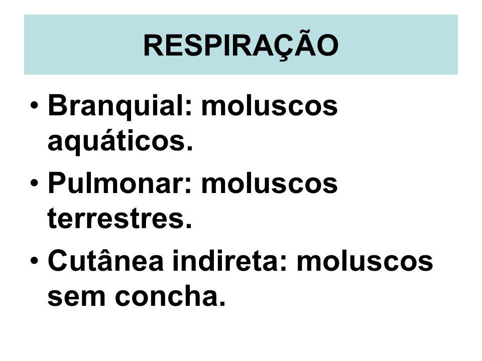 RESPIRAÇÃO Branquial: moluscos aquáticos. Pulmonar: moluscos terrestres. Cutânea indireta: moluscos sem concha.
