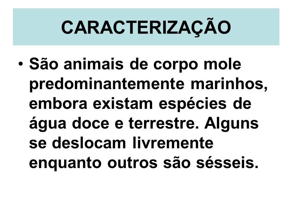 CARACTERIZAÇÃO São animais de corpo mole predominantemente marinhos, embora existam espécies de água doce e terrestre. Alguns se deslocam livremente e
