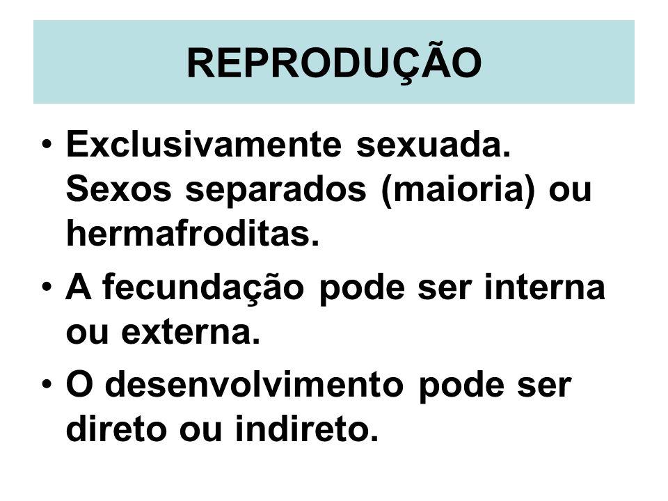 REPRODUÇÃO Exclusivamente sexuada. Sexos separados (maioria) ou hermafroditas. A fecundação pode ser interna ou externa. O desenvolvimento pode ser di