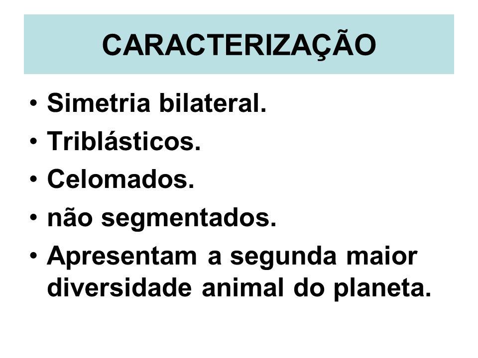CARACTERIZAÇÃO Simetria bilateral. Triblásticos. Celomados. não segmentados. Apresentam a segunda maior diversidade animal do planeta.