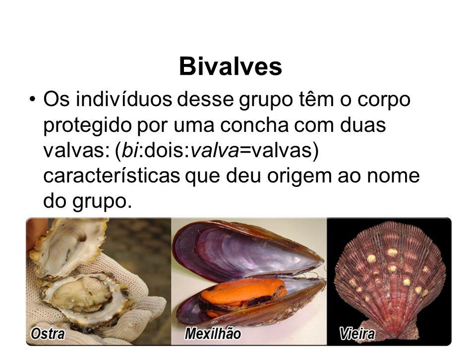 Bivalves Os indivíduos desse grupo têm o corpo protegido por uma concha com duas valvas: (bi:dois:valva=valvas) características que deu origem ao nome