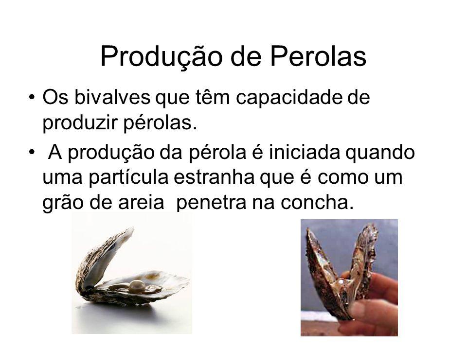 Produção de Perolas Os bivalves que têm capacidade de produzir pérolas. A produção da pérola é iniciada quando uma partícula estranha que é como um gr