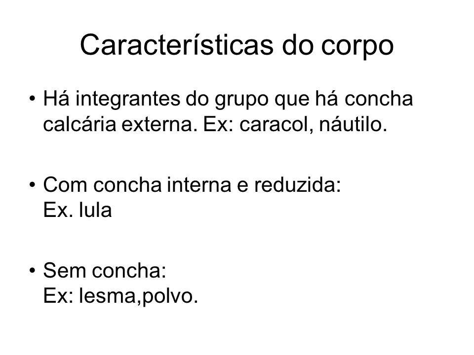 Características do corpo Há integrantes do grupo que há concha calcária externa. Ex: caracol, náutilo. Com concha interna e reduzida: Ex. lula Sem con