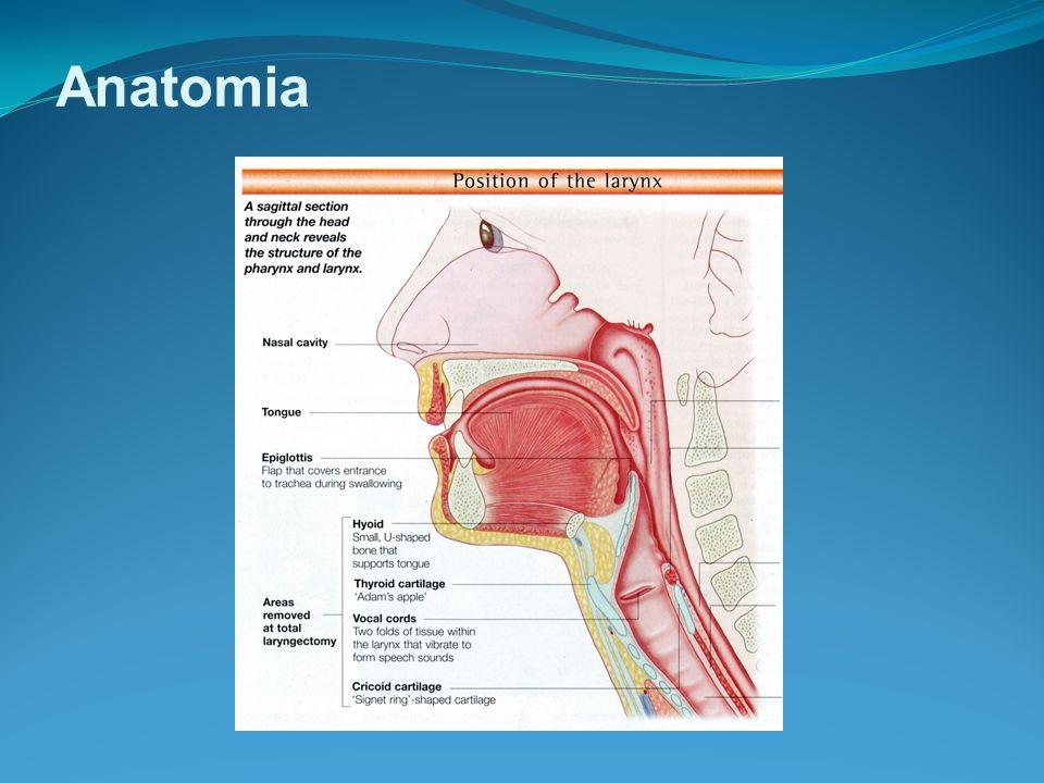 Cirurgia Microlaringocirurgia Hemilaringectomia fronto-lateral (vertical) Hemilaringectomia supraglótica (horizontal) Laringectomia total Radiaterapia Quimioterapia Tu de laringe Tratamento – Opções: A considerar 1) Local e tipo do tumor 2) Invasão adjacente 3) Metástases