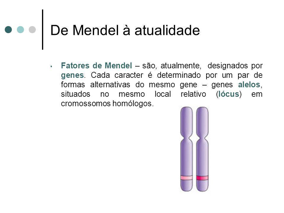 Fatores de Mendel – são, atualmente, designados por genes. Cada caracter é determinado por um par de formas alternativas do mesmo gene – genes alelos,