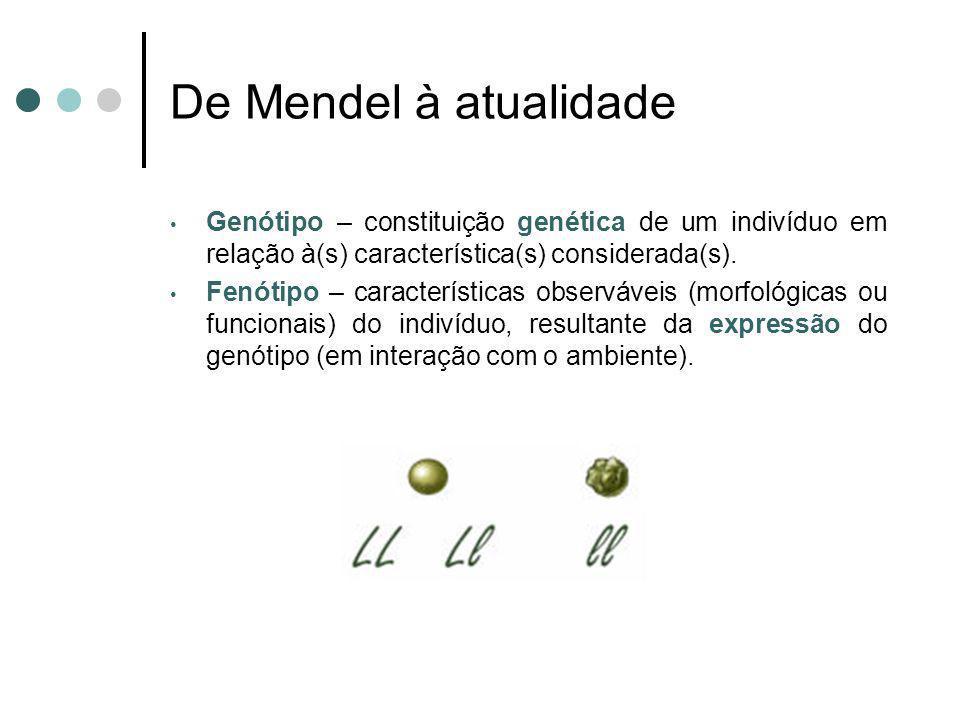 De Mendel à atualidade Genótipo – constituição genética de um indivíduo em relação à(s) característica(s) considerada(s). Fenótipo – características o