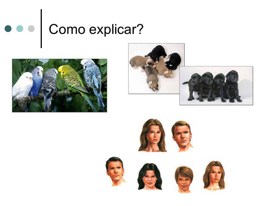 Fatores de Mendel – são, atualmente, designados por genes.