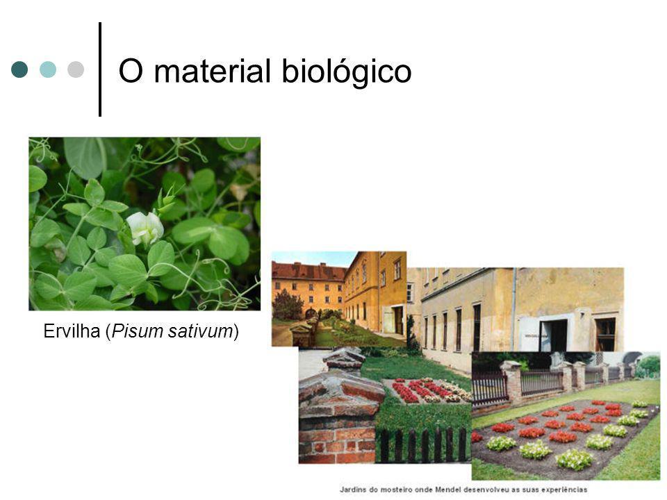 O material biológico Ervilha (Pisum sativum)