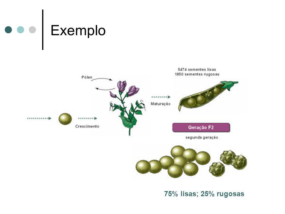 Interpretação moderna dos resultados de Mendel No cruzamento parental os progenitores são homozigóticos dominantes (RR) ou recessivos (rr); Cada progenitor forma gametas contendo um só tipo de alelo; Os indivíduos da geração F 1 são 100% heterozigóticos (Rr); Os indivíduos da geração F 2 são: 25% homozigóticos dominantes ( RR); 50% heterozigóticos (Rr); 25% homozigóticos recessivos (rr); 75% manifestam o fenótipo dominante e 25% manifestam o caráter recessivo.
