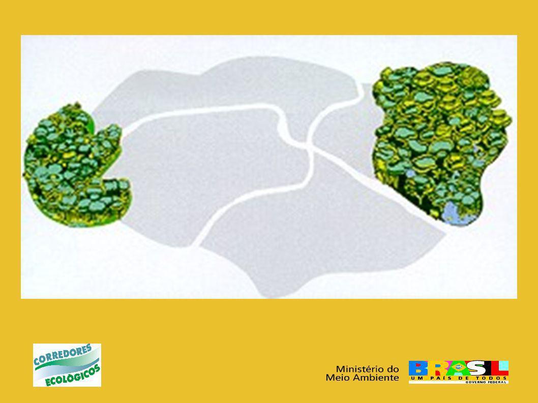 Corredor Central da Amazônia (CCA) Monitoramento da Cobertura Florestal das UCs: aquisição de equipamentos, programas e imagens de satélite Oficina: elaboração Plano de Ação para Comunicação e Educação Ambiental (73 participantes de instituições governamentais, não governamentais e de comunidades).