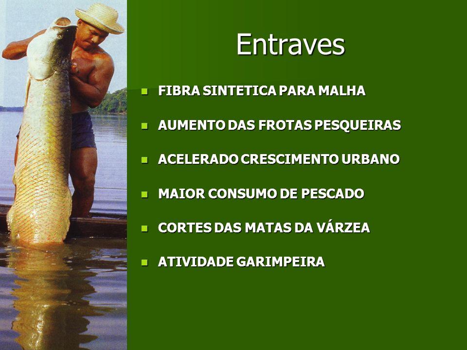 PROJEÇÃO DE CRESCIMENTO DO PIB Amazonas São Paulo RioMinas 10.000,00 100.000,00 1.000.000,00 10.000.000,00 100.000.000,00 1.000.000.000,00 10.000.000.000,00 200520202035205020652080209521102125214021552170218522002215 (em milhões de R$) Premissa: O Amazonas crescendo a 5,5% e os demais Estados, 4%