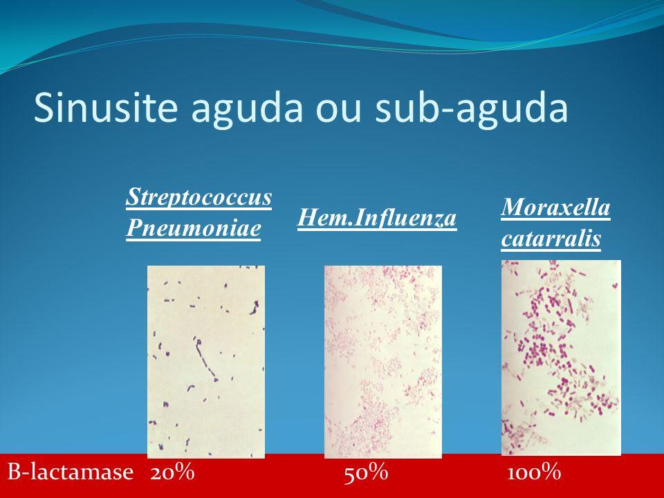 Sinusite aguda ou sub-aguda B-lactamase 20% 50% 100% Streptococcus Pneumoniae Hem.Influenza Moraxella catarralis