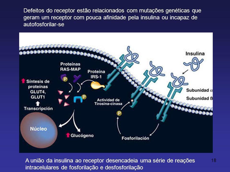 18 Defeitos do receptor estão relacionados com mutações genéticas que geram um receptor com pouca afinidade pela insulina ou incapaz de autofosforilar-se A união da insulina ao receptor desencadeia uma série de reações intracelulares de fosforilação e desfosforilação