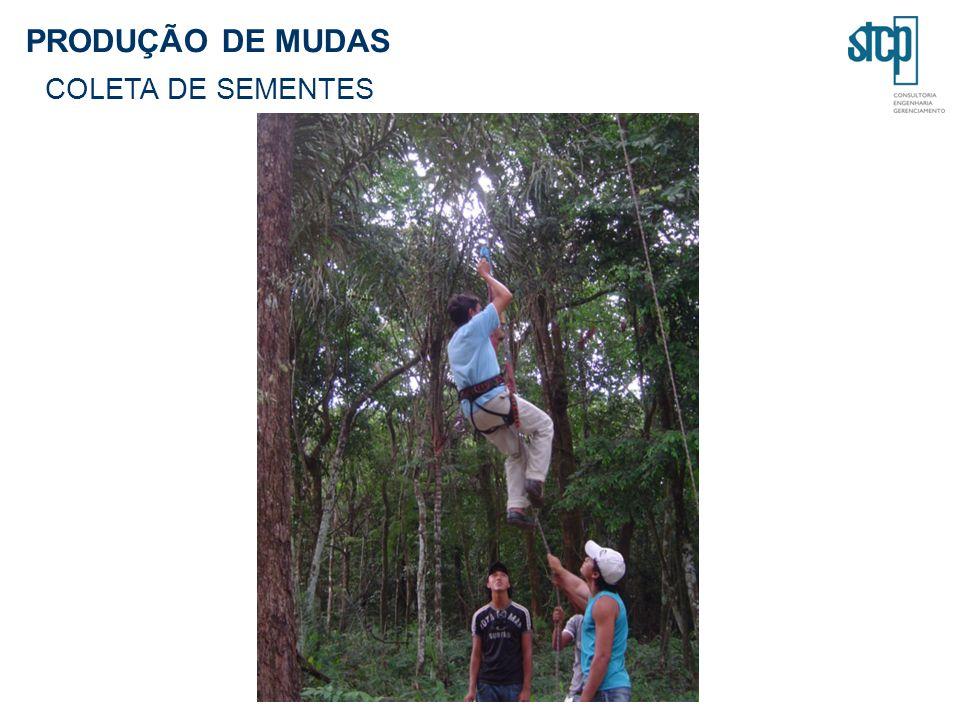 PRODUÇÃO DE MUDAS COLETA DE SEMENTES