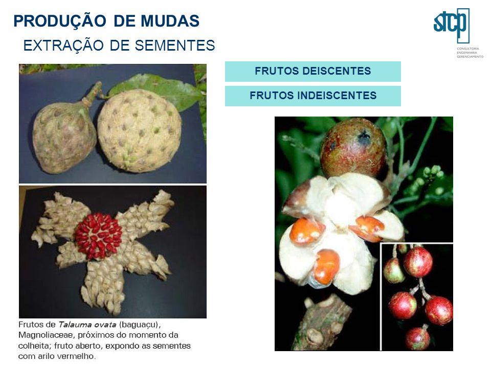 PRODUÇÃO DE MUDAS EXTRAÇÃO DE SEMENTES FRUTOS DEISCENTES FRUTOS INDEISCENTES