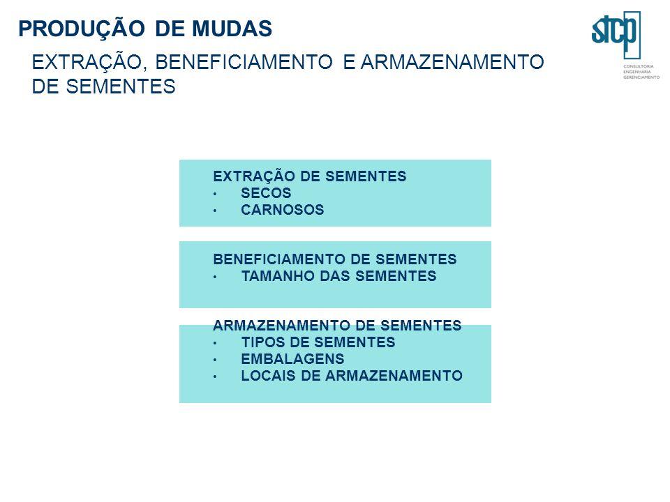 SECOS CARNOSOS BENEFICIAMENTO DE SEMENTES TAMANHO DAS SEMENTES ARMAZENAMENTO DE SEMENTES TIPOS DE SEMENTES EMBALAGENS LOCAIS DE ARMAZENAMENTO PRODUÇÃO DE MUDAS EXTRAÇÃO, BENEFICIAMENTO E ARMAZENAMENTO DE SEMENTES