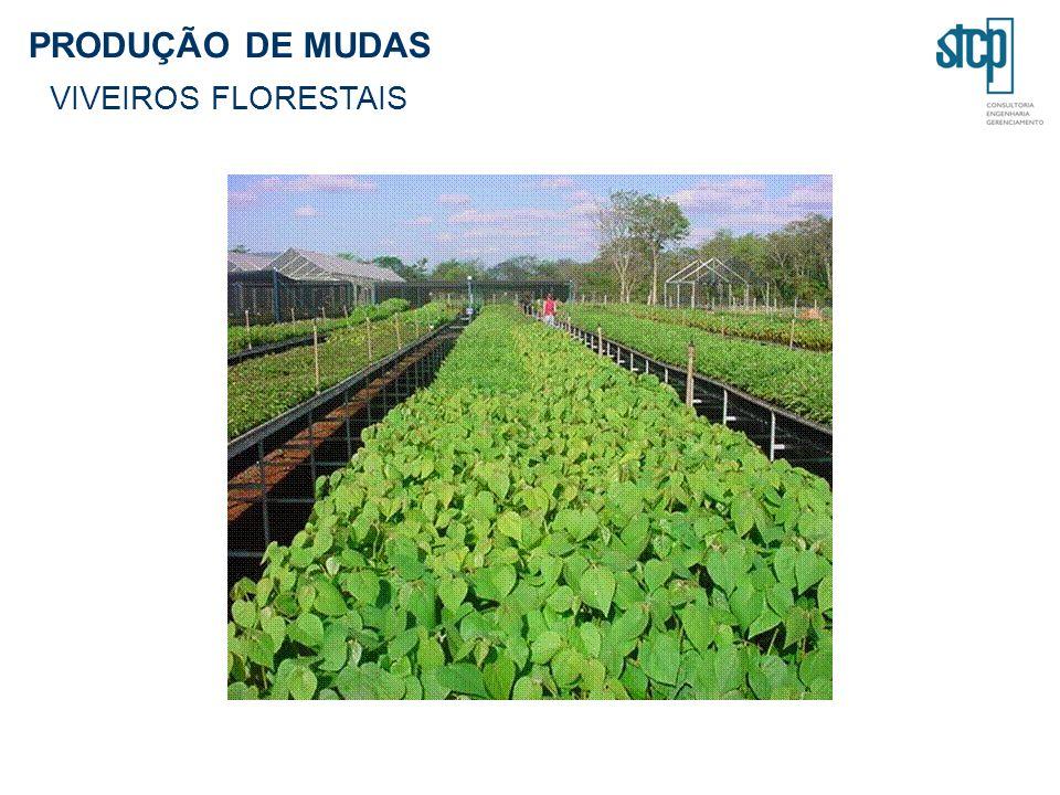 PRODUÇÃO DE MUDAS VIVEIROS FLORESTAIS