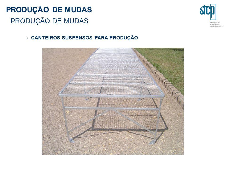 PRODUÇÃO DE MUDAS CANTEIROS SUSPENSOS PARA PRODUÇÃO