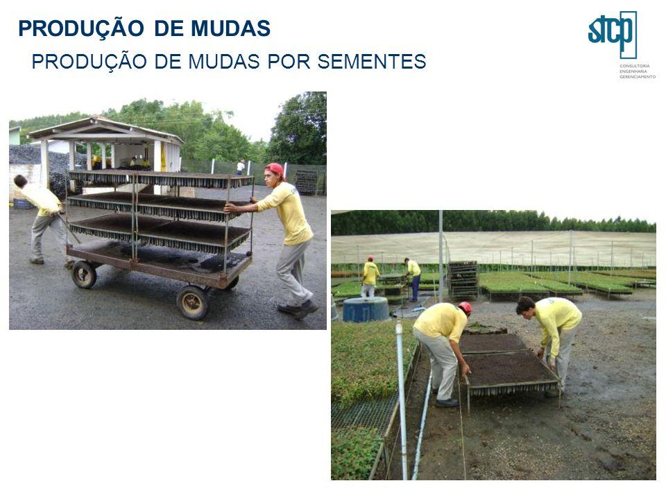 PRODUÇÃO DE MUDAS PRODUÇÃO DE MUDAS POR SEMENTES