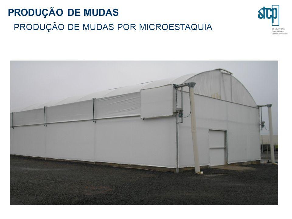 PRODUÇÃO DE MUDAS PRODUÇÃO DE MUDAS POR MICROESTAQUIA
