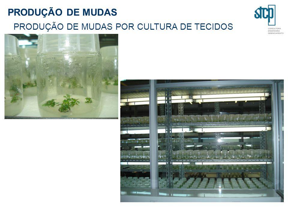 PRODUÇÃO DE MUDAS PRODUÇÃO DE MUDAS POR CULTURA DE TECIDOS