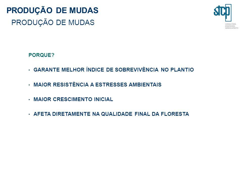 PRODUÇÃO DE MUDAS PORQUE.