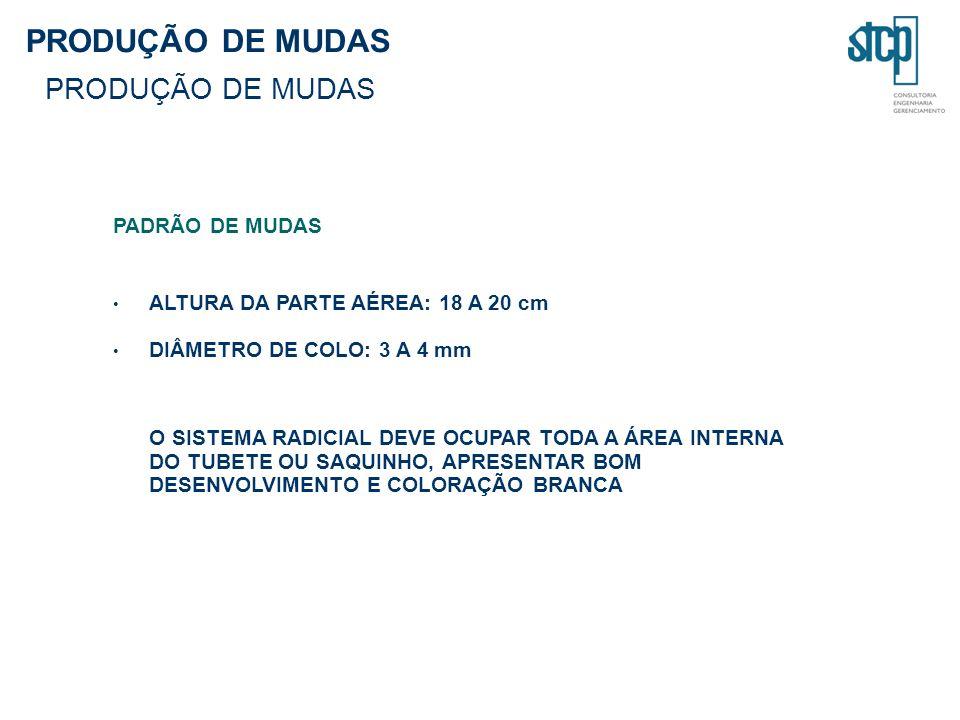 PRODUÇÃO DE MUDAS PADRÃO DE MUDAS ALTURA DA PARTE AÉREA: 18 A 20 cm DIÂMETRO DE COLO: 3 A 4 mm O SISTEMA RADICIAL DEVE OCUPAR TODA A ÁREA INTERNA DO TUBETE OU SAQUINHO, APRESENTAR BOM DESENVOLVIMENTO E COLORAÇÃO BRANCA