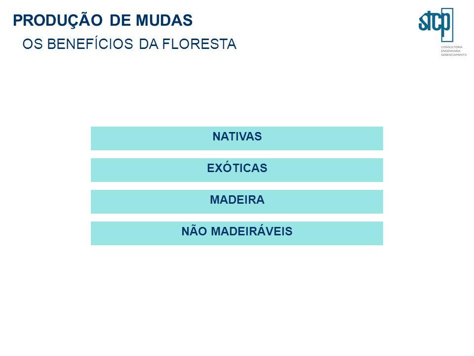 PRODUÇÃO DE MUDAS OS BENEFÍCIOS DA FLORESTA NATIVAS EXÓTICAS MADEIRA NÃO MADEIRÁVEIS