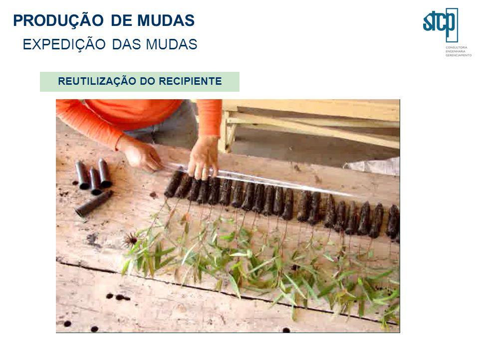 PRODUÇÃO DE MUDAS EXPEDIÇÃO DAS MUDAS REUTILIZAÇÃO DO RECIPIENTE