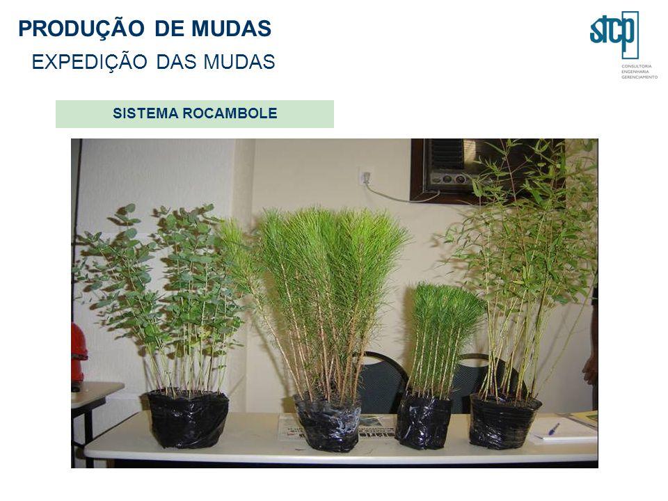 PRODUÇÃO DE MUDAS EXPEDIÇÃO DAS MUDAS SISTEMA ROCAMBOLE